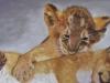 Loin Cubs